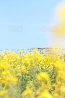 花のクローズアップの写真・画像素材[2203633]