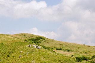 近くに緑豊かな緑の丘陵のアップの写真・画像素材[719407]