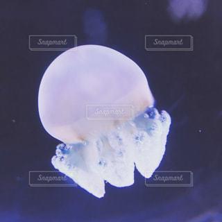 クラゲの写真・画像素材[701215]