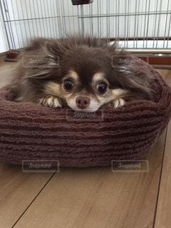 犬 - No.701256
