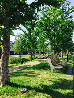 ツリーの横にある空の公園ベンチの写真・画像素材[1246444]