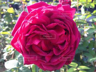 近くの花のアップの写真・画像素材[751445]