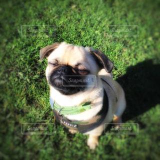 近くに緑のフリスビー犬のアップの写真・画像素材[815065]