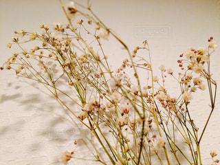 近くの花のアップの写真・画像素材[710130]