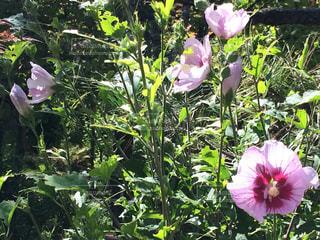 緑の葉とピンクの花 - No.719079