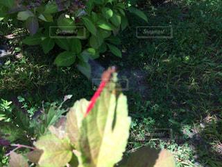 庭園の緑の植物の写真・画像素材[719086]