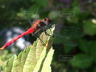 枝に座っている小さな赤い鳥の写真・画像素材[719087]
