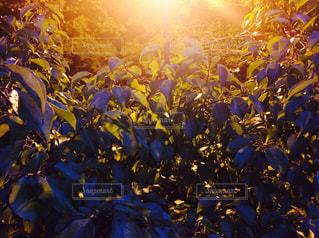 近くの花のアップ - No.773249