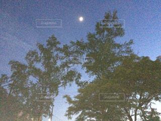 近くの木のアップ - No.1194819
