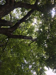木のクローズアップの写真・画像素材[2183048]
