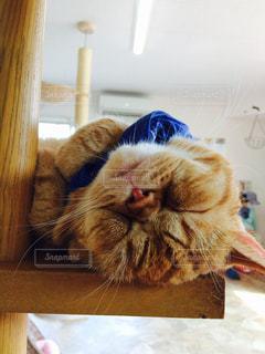 テーブルの上に座って猫の写真・画像素材[755292]