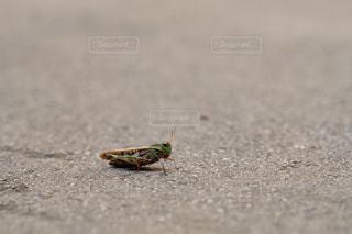 虫の写真・画像素材[703052]