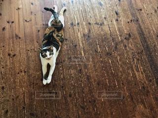 猫の写真・画像素材[703660]