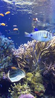 サンゴの水中ビューの写真・画像素材[705083]