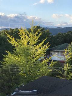 背景の山と木の写真・画像素材[713900]