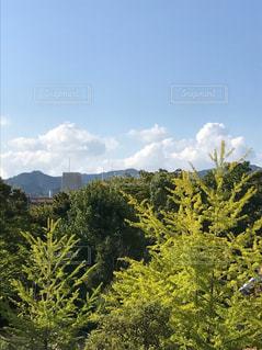 近くの木のアップの写真・画像素材[715261]
