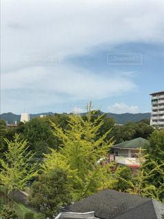 クローズ アップ庭園の - No.729040
