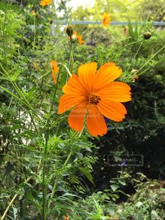 カラフルな花の植物の写真・画像素材[745187]