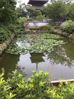 水の体の隣にある茂みのグループの写真・画像素材[745755]