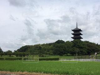 背景の木と大規模なグリーン フィールドの写真・画像素材[745756]