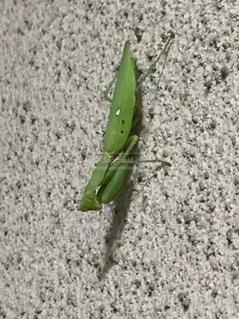 近くに緑のフリスビーのアップの写真・画像素材[810352]