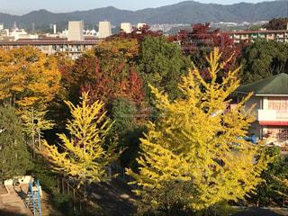 市の木の写真・画像素材[846263]