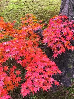 ピンクの花の木の写真・画像素材[890405]