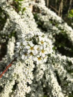 近くの花のアップの写真・画像素材[1124510]