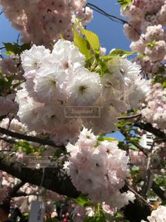 近くの花のアップの写真・画像素材[1134516]