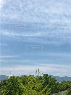 フィールドのツリーの写真・画像素材[1260564]