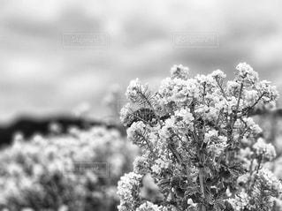 近くの花のアップの写真・画像素材[1799030]