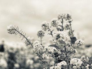 木の花の花瓶の写真・画像素材[1799046]