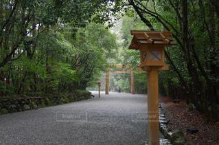 道の端に木のパス - No.706478