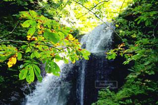 森の中の大きな滝 - No.748885