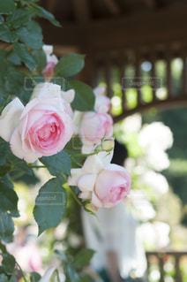 近くの花のアップ - No.720756