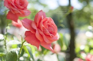 近くの花のアップ - No.720757