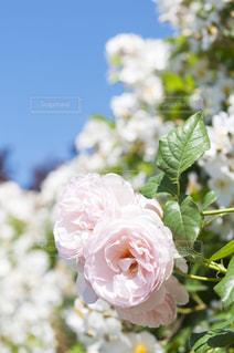 近くの花のアップ - No.720758