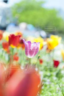 近くの花のアップ - No.720761