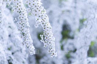 近くの花のアップ - No.720762