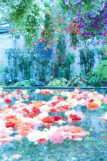 色とりどりの花のグループ - No.720765