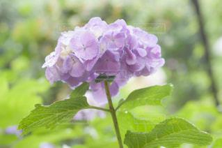 近くの花のアップ - No.720768
