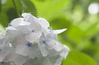 近くの花のアップ - No.720769