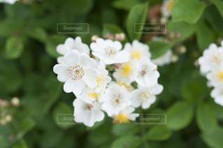 近くの花のアップ - No.720770