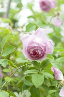 近くの花のアップ - No.720771
