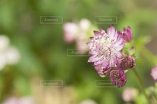 近くの花のアップ - No.720772