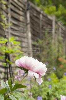 近くの花のアップ - No.720773