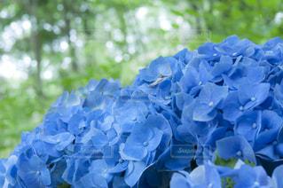 近くの花のアップ - No.720774