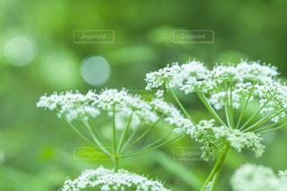 近くの花のアップ - No.720775