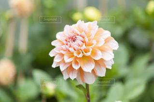 近くの花のアップ - No.720776