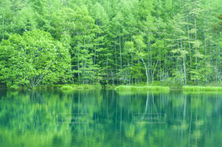 近くに池のアップ - No.720777